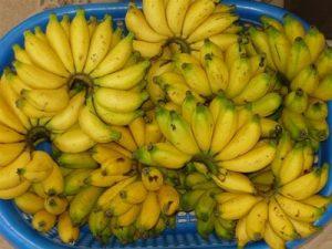 pisang-lemak-manis