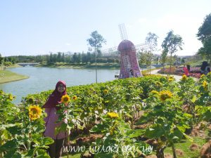 Pemandangan di Sunflower garden