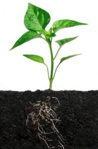 Akar tanaman