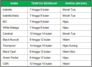 Senarai anggur yang ditanam di Malaysia