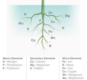 nutrien yang diserap oleh akar