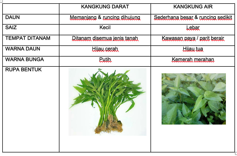 Tanaman Kangkung Myagri Com Mymyagri Com My