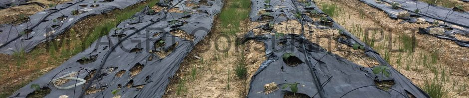 Fertigasi berasaskan tanah